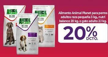 Oferta de Comida para perros Animal Planet por